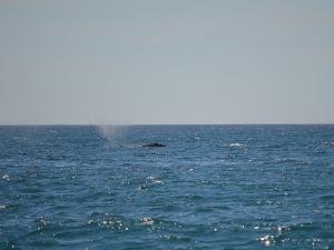 WW Lone whale