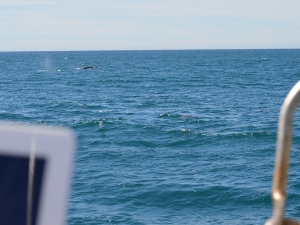 WW Whale off end of boat