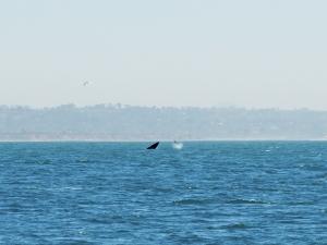 WW Whales tale