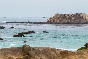 17 mile drive seagull