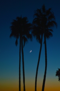 NC Village two palms and moon