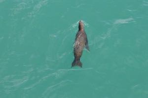 San Clem--Seal 1