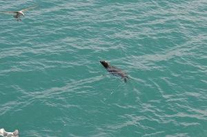 San Clem Seal 2