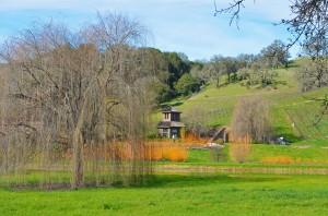 FB- HOuse with Orange bushes