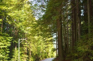 FB-Redwoods road