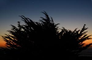 FB_ Star and Tree
