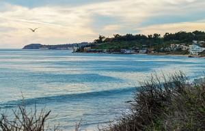 Malibu Sea Gull