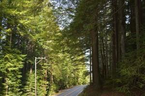Mendo-Redwoods