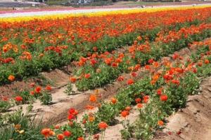 Flowers row 2