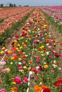 Flowers row