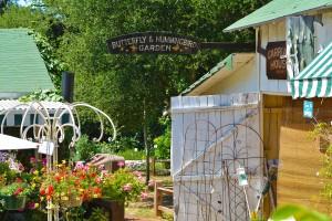 Myrtle Butterfly garden