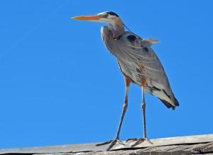 Redondo--Bird