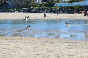 Dog Beach 2