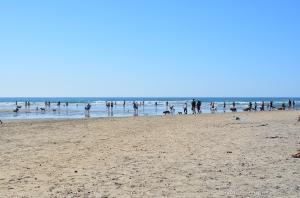 Dog beach 3