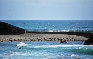 LJ Seal Beach