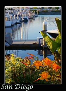San Diego with flowers Pinterest