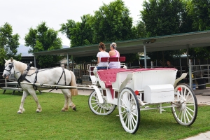 The carriage