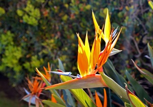 Bird of Paradise Facebook