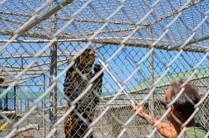 Lions 10 glenn feeding Leopard