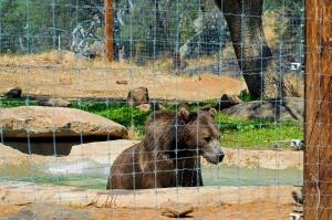 Lions 6 Bear Bath