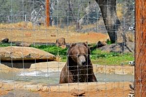 Lions Bear bath 2