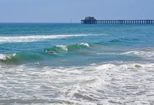 Seal Bodysurfing G