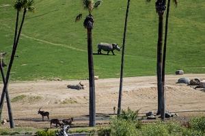 Rhinos 800