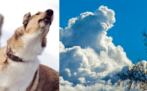 Dog Clouds