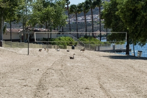 Local Bords ate volleyball court