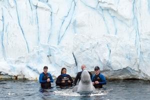beluga-interaction