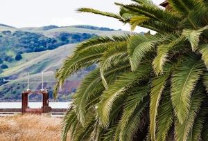 benecia-palm-tree
