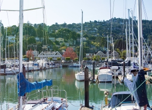 sausalito-boats-by-red-tree