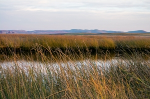small-delta-with-reeds