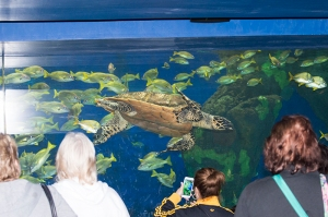 the-turtle-aquarium