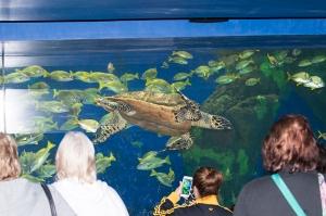 the-turtle-aquarium