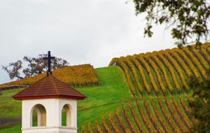 vineyards-with-church