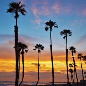 Sunset lots of palm trees 800